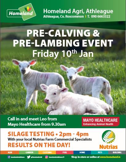 Athleague-Lambing