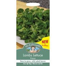 Lambs Lettuce Vision