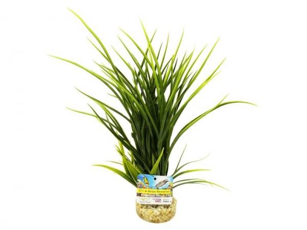 Bioaqua Acorus Plant