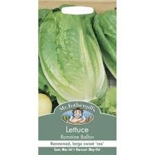 Lettuce Romaine Ballon