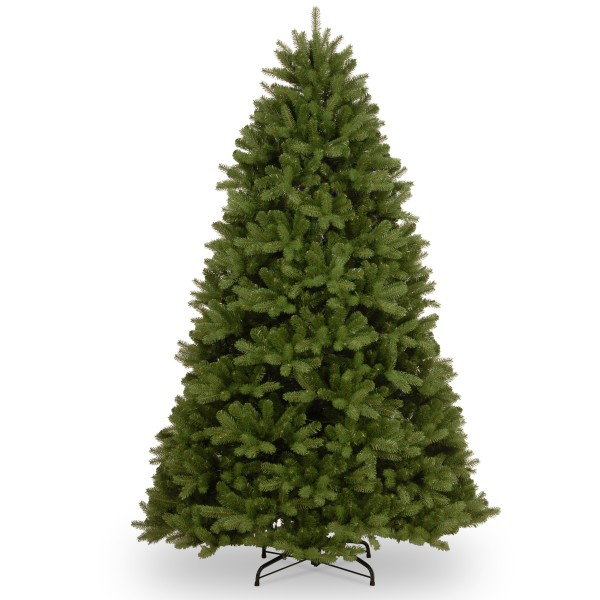 Newberry Spruce Tree - 7.5ft