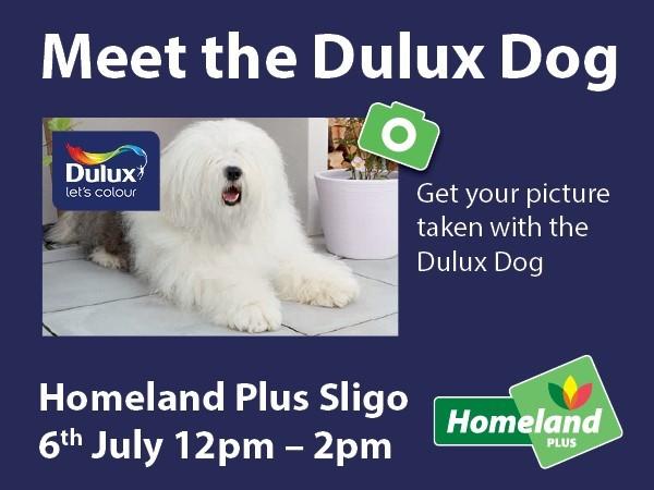 Dulux-dog-event-sligo-july-2019