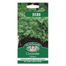 Coriander Cilantro (For Leaf)