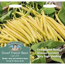 Dwarf French Bean Cala D'Or
